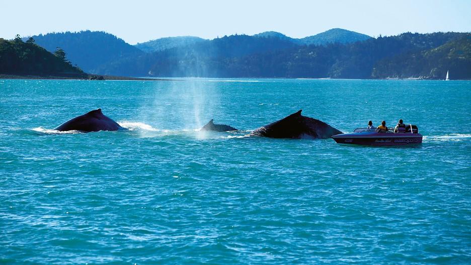 Whitsunday islands holidays find cheap whitsunday islands holiday