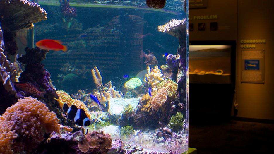 birch aquarium in san diego california expedia