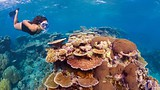 Great Barrier Reef - Cairns - Tourism Queensland