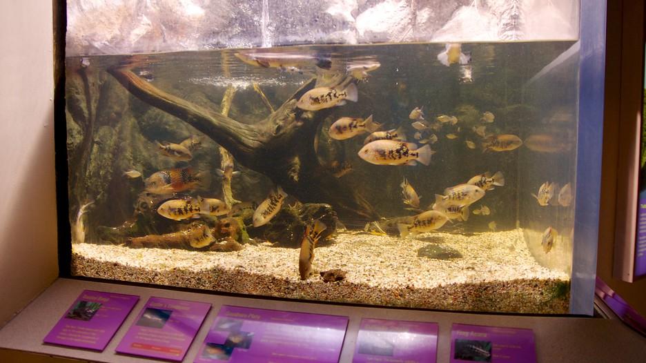 Newport Aquarium In Cincinnati Kentucky Expedia