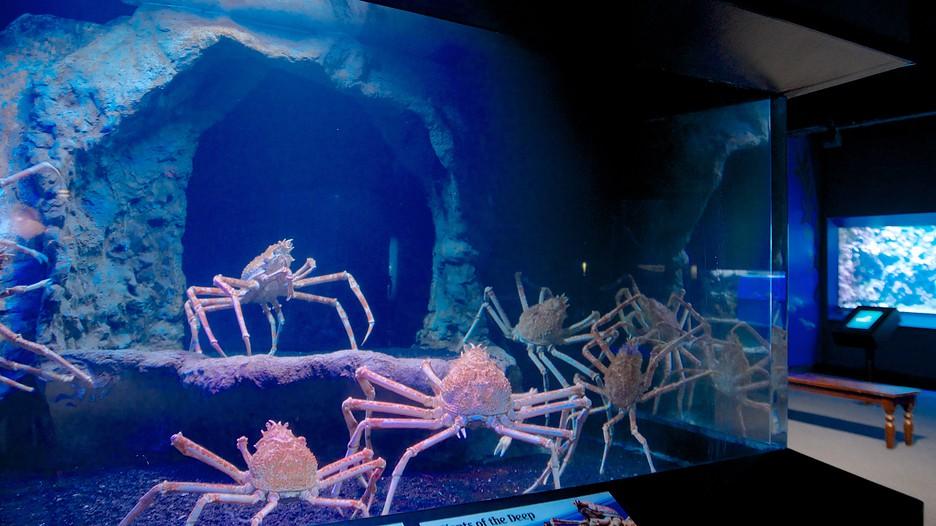 Cincinnati Aquarium Hours