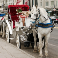 Central Park Horse and Carriage Ride
