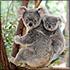 Lone Pine Koala Sanctuary General Admission