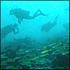 Discover Dive at Tunku Abdul Rahman Park