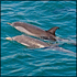 Dolphin Safari Cruise in Gibraltar
