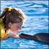 Dolphinaris Cancun: Interactive Dolphin Programs