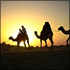 Sunset Camel Safari with Bedouin Barbecue Dinner
