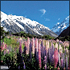 Gray Line New Zealand: Queenstown, Mount Cook, and Christchurch Full-Day Tour