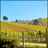 Napa and Sonoma Eco Wine Tour (Includes Winery Tram Tour; Petroleum Free)