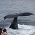 New England Aquarium Admission and Whale-Watching Cruise