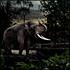 Night Safari: Premier Safari Tour