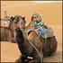 Sahara Tours: Dromedary Trekking through the Sand Dunes and Eucalyptus Forests