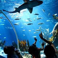 Sea Life Centre Details