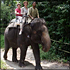Singapore Zoo Admission with Roundtrip Transfer