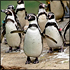 1-Day Pass to Woodland Park Zoo