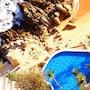 Holiday Inn Resort Acapulco photo 16/41