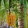 Bali Garden Beach Resort photo 6/41