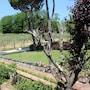 Villa Agostoli photo 12/41