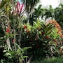 Oasis de Grande Anse photo 20/41
