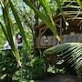 West Indies Cottage photo 26/41