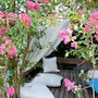 Irem Garden Hotel & Apartments photo 14/41