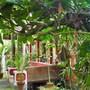 Eden Garden Ayurvedic Health Retreat photo 31/40
