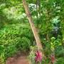 Eden Garden Ayurvedic Health Retreat photo 16/40