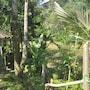 Tepi Sawah Lodge photo 35/41