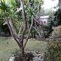 Villa Kamar Madu photo 19/41