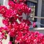 Zefyros Hotel photo 14/41