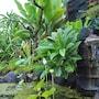 Trijaya Guest House photo 34/41