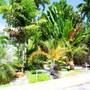 Majesty Palm photo 35/41