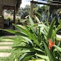 Tropical Garden Homestay photo 34/41