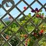 Benvenuti Nel Sud photo 14/41