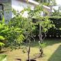 CoconutsPalm Resort photo 37/41