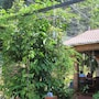 Gia Thanh Guest House photo 5/27
