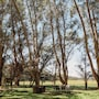 Margaret River Holiday Cottages photo 13/41