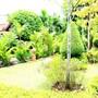 Baan Vanida Garden Resort photo 23/41