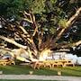 Marvel Tree Hotel photo 17/39