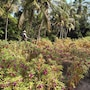 Royal Tulip Visesa Ubud photo 12/41