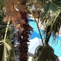 Semoris Hotel photo 37/41