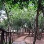 Sigiri Wilderness Resort photo 17/18