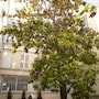 Furnished Apartments - Le Marais photo 28/41