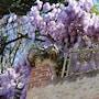 La Cuccagna di Don Bosco photo 5/26
