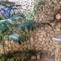 Vanuatu Secret Garden Resort photo 3/11
