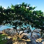 Baan Hin Sai Resort & Spa photo 7/41