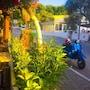 Camlikosk Apart Hotel photo 36/41