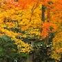 Stay SAKURA Kyoto Nijo Castle West II photo 30/36