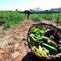 Masseria Costarella photo 37/41