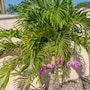 Nianna Coral Bay Luxurious Townhouse- 3 photo 11/41